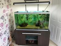 Fluval Osaka 320 Fish Tank