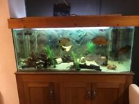 Large fish tank and cabinet for sale