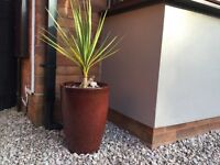 OUTDOOR PLANT POT AND PALM .... TORQUAY ....