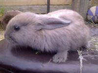 YOUNG FRIENDLY RABBIT ABOUT 9 WEEKS OLD