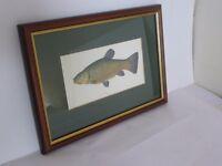 Framed fish prints