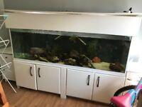 6ft fish tank contains everything £250 or best offer