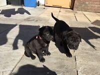 2 Beautiful Puppies
