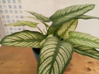 SMALL and BEAUTIFUL artificial house plant