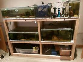 3xfish tank plus heaters and sponge filters