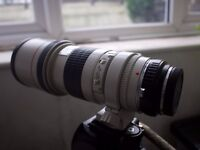 Canon 300mm F4 (Non IS ) (reasonable offer wellcome )