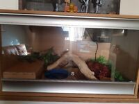 Entire Royal Python collection, 9 snakes, one 3ft Viv, converted Ikea unit with heat cables etc.
