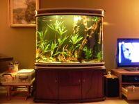 Fish tank 3ft hight+Pterophyllum altum full set up