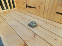 16 year old tortoise