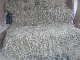 small hay bales this years. bitton bristol.