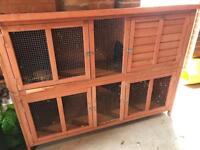 Bluebell Rabbit / Guinea Pig Hutch