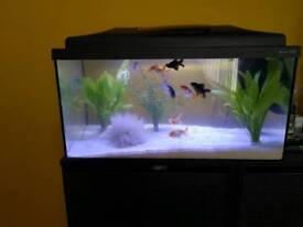 Aquarium fish+accessories