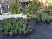 garden centre newport street vauxhall central London lots of new plants in stock