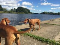 West Bridgford Professional Dog Walking