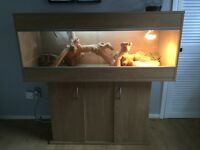 4 foot Vivexotic Vivararium & Cupboard
