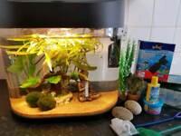 40l fish tank aquarium with 2 fish +extras