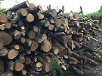 Conifer Wood For Sale