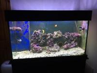 Clear Seal Marine Tank with Cabinet