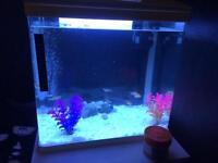 35 Litre Aquarium