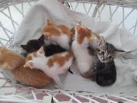 Kittens Tabby And Ginger