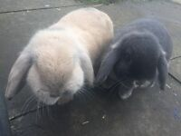Rabbits, hutch and run