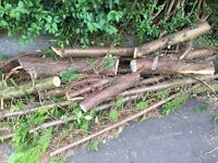 Free large logs/fire wood