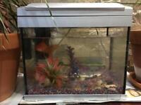 Aquarium Set with 3 Gold Fish