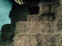Small Bale Hay for Sale North Bristol £3.00 each