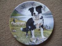 "Royal Grafton TYKE 8"" boarder Collie plate"