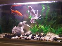 3 gold fish, 60 litre fish tank with stand, gravel, ornament, plants and equipment