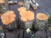 Log tree stumps chainsaw garden furniture tables chairs or just firewood silver birch £30 Each