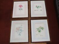 Set of 4 Limited Edition botanical prints.Frans Andreas Bauer.British Natural History Museum.