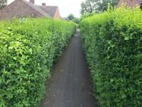 Hedges & Lawns need a trim? Special rates for OAP's from just £20!
