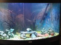 A Fish Tank for sale