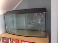 200L Fish Tank (Used but in good condition)