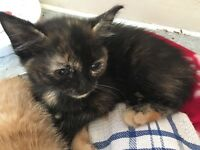 Kittens looking for new home asap