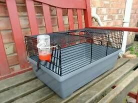 Gerbil /hamster