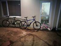 3 bicycles (bargain