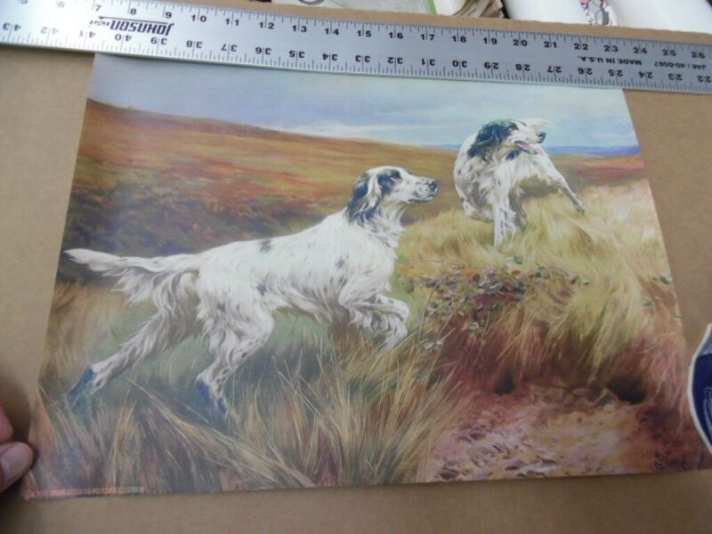 1940s Thomas Blinks English Setter Hunting Dog Lithograph Print Vintage Original