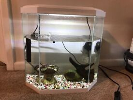 Ciano 25L Fish Tank and small Sucker Fish