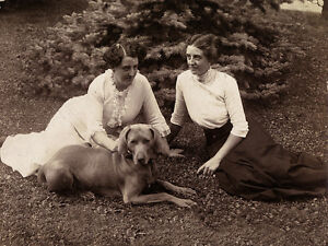 WEIMARANER-CHARMING-DOG-GREETINGS-NOTE-CARD-TWO-EDWARDIAN-LADIES-AND-THEIR-DOG