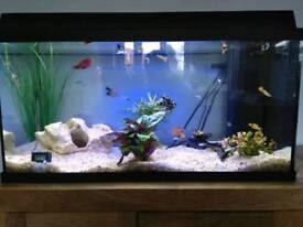 Juwel 110 Tropical Aquarium