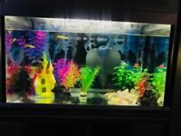 Fish tank with all equipment and fish