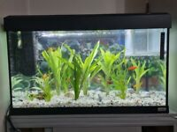 Fish Tank & Tropical Fish For Sale