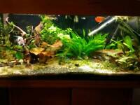 Tropical fish tank 200 l 3 feet with stand