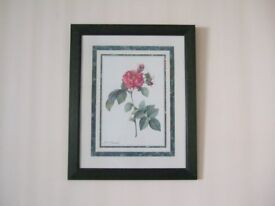 Framed fine art print picture by P.J. Redoute of a red pink Rose bloom flower