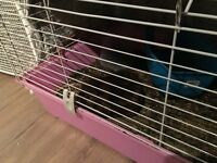 Guinea Pig and indoor cage free to good home.