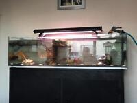 Large 6ft aquarium with all accessories