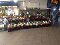 Florist full / Part Time