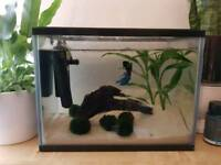 Small fish tank with betta fish